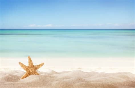 summer beach with starfish beach nature categories