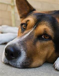 What Are the Symptoms of a Dog Dying from Kidney Failure