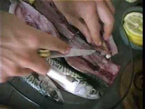comment cuisiner le hareng du poisson entier au filet le maquereau doovi