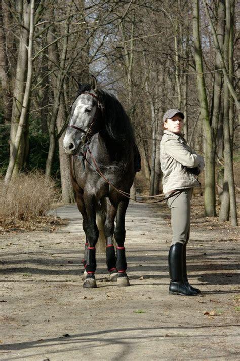each looking meeting horse away riding eye concept recreate rider horses
