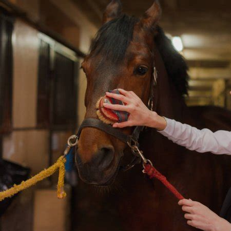 brushes horse grooming types different
