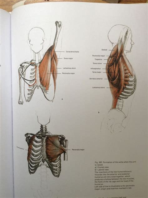 Review Of Bammes The Complete Guide To Anatomy  Love Life