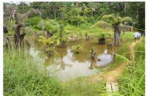 Rice-fish farming in Guinée Forestière – outcome of a rural ...