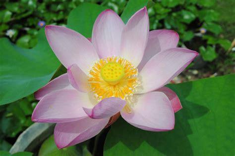 japaneese flowers vegetables are smarter than fruits three high iq japanese veggies soranews24