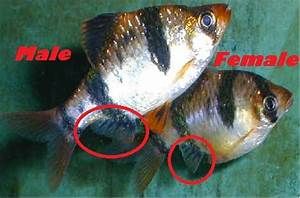 How do I Tell the of My Fish