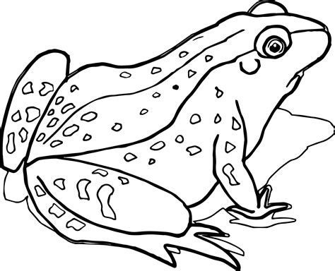 Amphibian Pages Realistic Coloring Pages