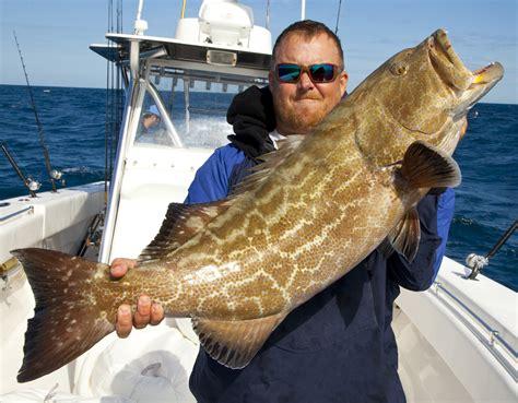 grouper fish tortugas dry fishing west key charter eat delphfishing benefit fillet nov