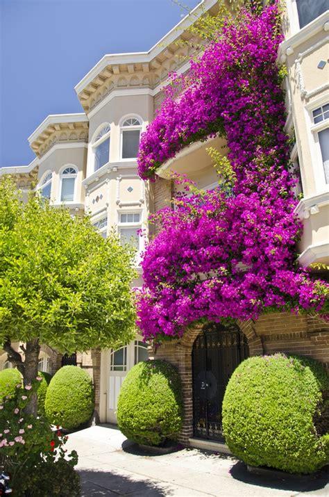 kletterpflanzen balkon kletterpflanzen auf balkon und terrassen sichtschutz und begrünung