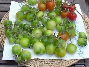 Grüne Tomaten Nachreifen : gr ne tomaten im schon k hlen herbst ~ Lizthompson.info Haus und Dekorationen