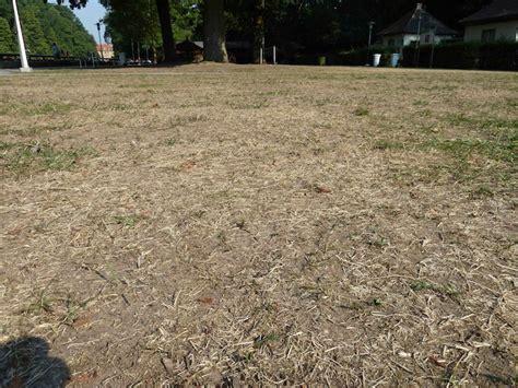 Ameisenplage Im Garten Bek Mpfen 2797 by Rasen Sprengen Morgens Oder Abends Ameisenplage Im Rasen