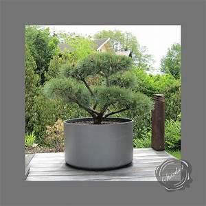 Large, Round, Planter, For, Specimen, Plant