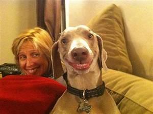 Kleiner Zaun Für Hunde : lachen ist gesund 21 lustigen grimassen bei tieren ~ Sanjose-hotels-ca.com Haus und Dekorationen