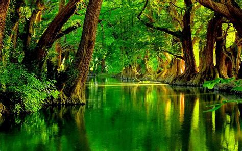 Green Forest Picture by Green Forest Wallpaper Hd Wallpapersafari