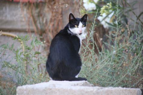 Oleander Giftig Für Katzen » Wirkung Und Vorgehen Im Notfall
