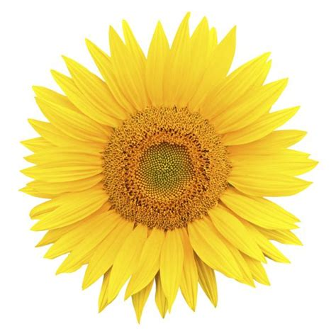 flower color understanding the symbolism and meaning of the color of
