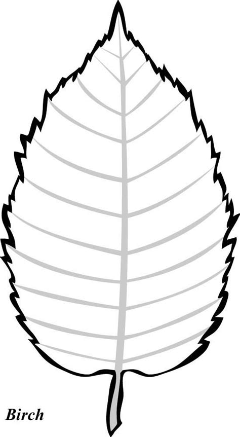 birch tree leaf template wood slices leaf template