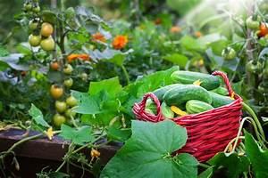 Wann Welches Gemüse Pflanzen Tabelle : hochbeet bepflanzen mit gem se wann wird was angebaut ~ Frokenaadalensverden.com Haus und Dekorationen