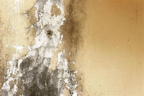 mold exposure lead  health problems cleanfirst