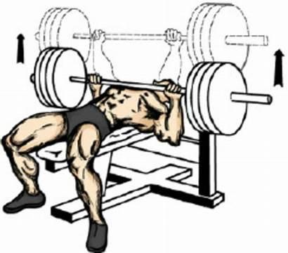 Bench Press Exercise Clipart Table Principle Clip