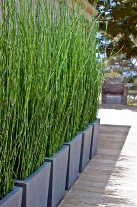 plant privacy screen bamboo privacy screen great alternative to a regular privacy wall and planting bamboo or grass