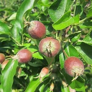 Apple Fruit Thinning