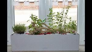 Gewächshaus Bewässerung Mit Regenwasser : k chenkr uter fensterbank deko tipps mit lechuza erd bew sserung youtube ~ Eleganceandgraceweddings.com Haus und Dekorationen