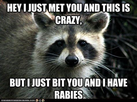 Funniest Animal Memes - most funny animal memes and humor pics quotes and humor
