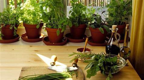 plante aromatique cuisine comment cultiver les plantes aromatiques en pot chez soi