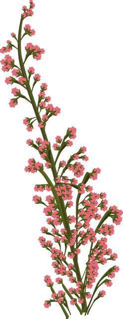 flower pink plant  image  pixabay