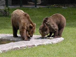 Tierpark Dessau Preise : tierpark dessau ottokar ~ Yasmunasinghe.com Haus und Dekorationen