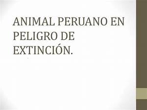 Animal En G : animal peruano en peligro de extinci n ~ Melissatoandfro.com Idées de Décoration