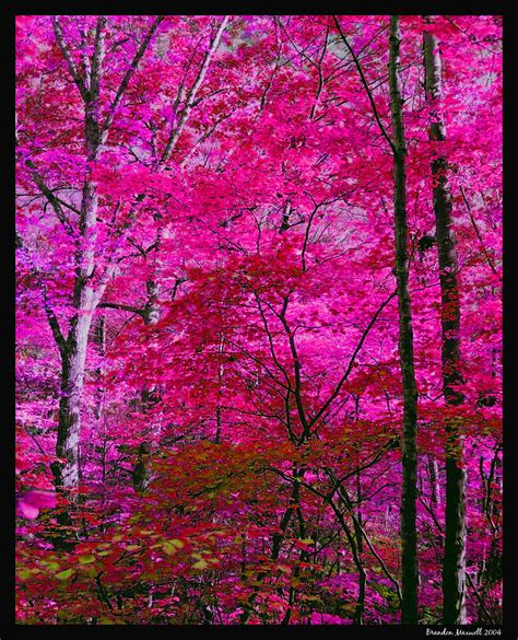 pink trees pink trees by pathos1 on deviantart