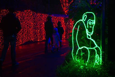 oregon ducks christmas lights zoolights set to return nov 24 with more than 1 6 million