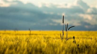 Grass Field Landscape Dry Desktop Wallpapers 1080p
