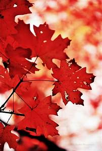 THE RED AESTHETIC | Red | Red aesthetic, Autumn aesthetic, Red  Red