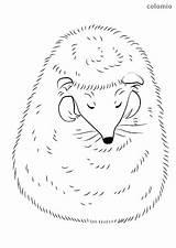 Hedgehog Coloring Sleeping Sweet Animals Printable Simple Realistic Hedgehogs sketch template