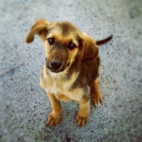 Cute Stray Dog