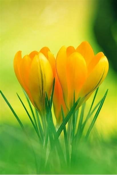 Yellow Flower Resolution Iphone 3d