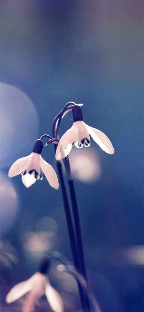 immagini di fiori da scaricare gratis scarica gratis i migliori sfondi hd per il tuo iphone
