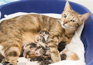 Rescued Tabby Cat Gives Birth To Eleven Kittens Just Days
