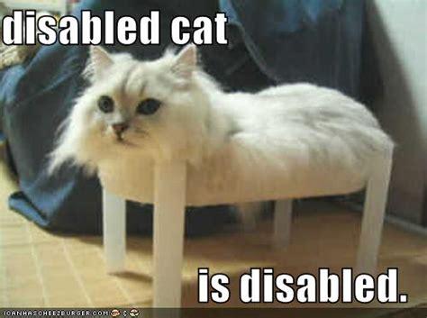 disabled cat  disabled cheezburger funny memes