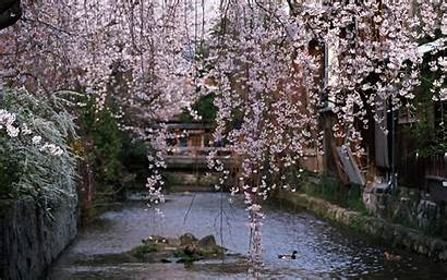 Spring Japan Season Cherry Blossoms Wallpapers Widescreen