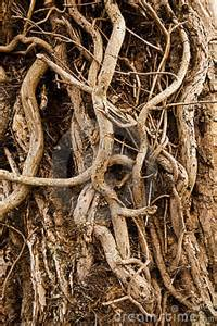 Tree Roots Close Up