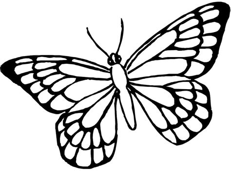 But the finished drawing should be very beautiful! Butterfly Coloring Pages   Free download on ClipArtMag