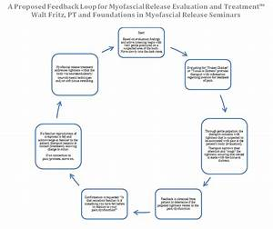 Simplifying Mfr  A Proposed Feedback Loop For Myofascial