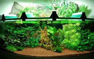 Aquarium Einrichten Anfänger : was ist aquaristik ~ Lizthompson.info Haus und Dekorationen