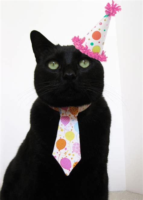 cat birthday catsparella planning your dream cat birthday party part two