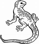Lizard Coloring Pages Monitor Monster Gila Iguana Drawing Printable Drawings Template Getcolorings Chuckwalla Getdrawings Sketch Monsters Colorings sketch template