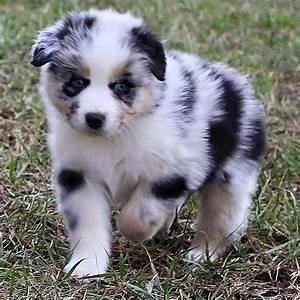 39 best images about cutest puppy ever on Pinterest ...