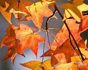 Fall Leaves Desktop Wallpapers - Wallpaper Cave